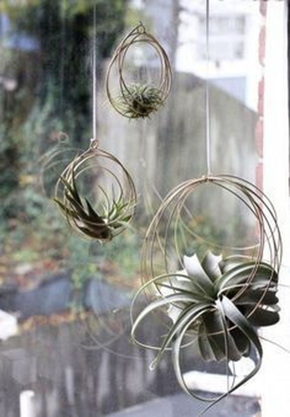 Amazing Air Plants Decor Ideas 41