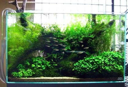 Amazing Aquarium Design Ideas Indoor Decorations 02