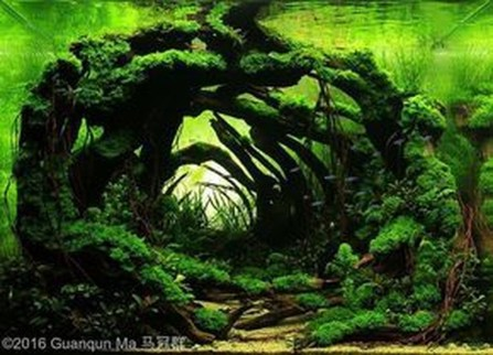Amazing Aquarium Design Ideas Indoor Decorations 12