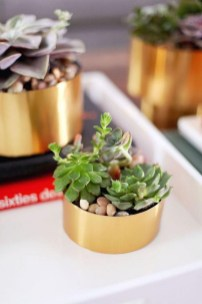 Amazing Diy Succulents Indoor Decorations 11