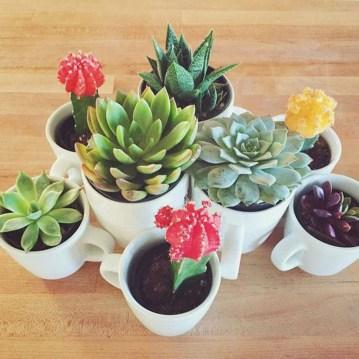 Amazing Diy Succulents Indoor Decorations 25