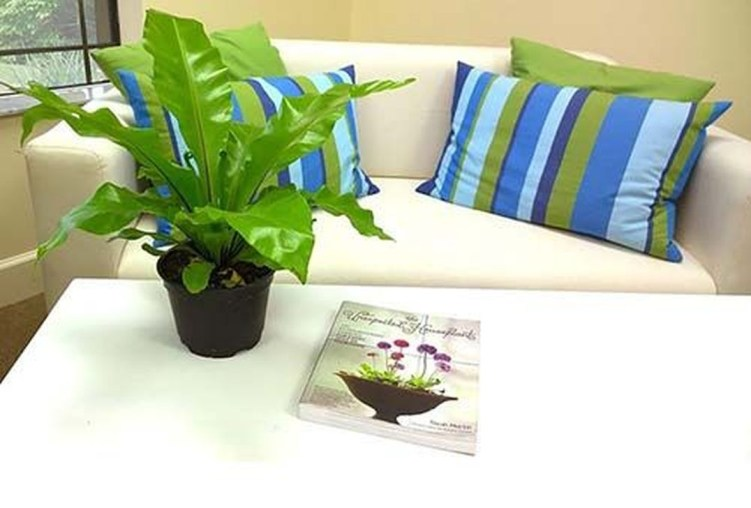 Amazing Easy Low Light Houseplants Indoor Decor 04