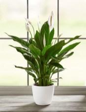 Amazing Easy Low Light Houseplants Indoor Decor 15