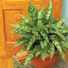 Amazing Easy Low Light Houseplants Indoor Decor 17