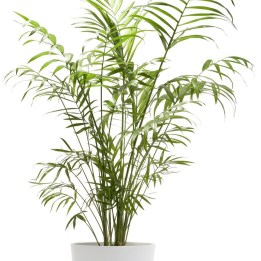 Amazing Easy Low Light Houseplants Indoor Decor 23