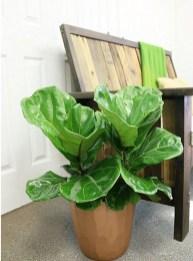 Amazing Easy Low Light Houseplants Indoor Decor 25