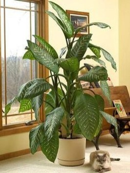 Amazing Easy Low Light Houseplants Indoor Decor 37