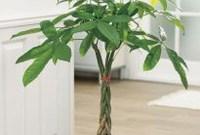 Amazing Easy Low Light Houseplants Indoor Decor 38
