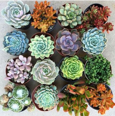 Amazing House Plants Indoor Decor Ideas Must 25