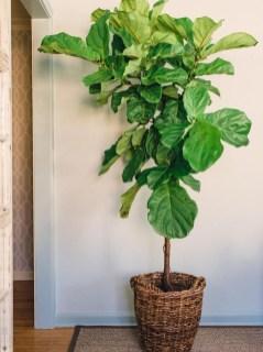 Amazing House Plants Indoor Decor Ideas Must 36