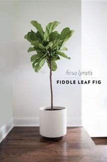 Amazing House Plants Indoor Decor Ideas Must 37