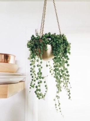 Amazing House Plants Indoor Decor Ideas Must 41