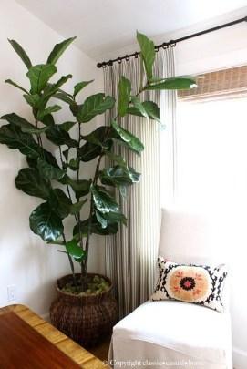 Amazing House Plants Indoor Decor Ideas Must 42