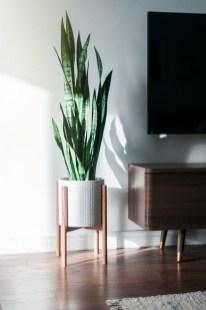 Amazing House Plants Indoor Decor Ideas Must 49