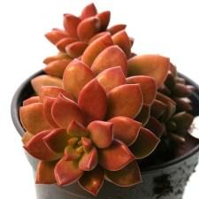 Amazing Succulents Garden Decor Ideas 11