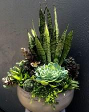 Amazing Succulents Garden Decor Ideas 13