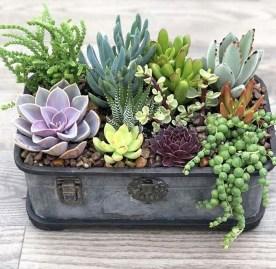 Amazing Succulents Garden Decor Ideas 22
