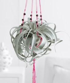 Creative Hanging Air Plants Decor Ideas 04