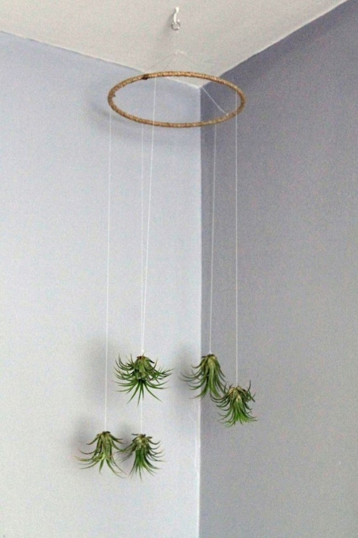 Creative Hanging Air Plants Decor Ideas 06