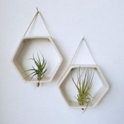 Creative Hanging Air Plants Decor Ideas 12