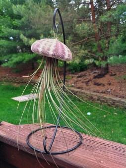 Creative Hanging Air Plants Decor Ideas 18