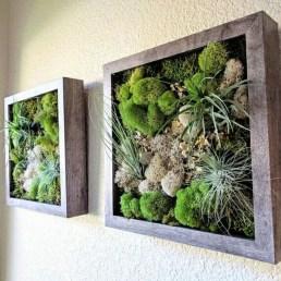 Creative Hanging Air Plants Decor Ideas 19