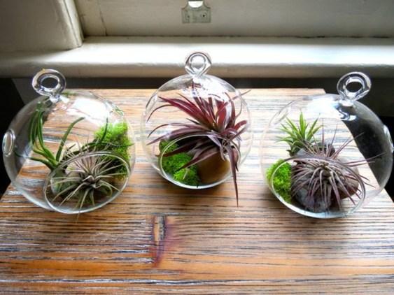 Creative Hanging Air Plants Decor Ideas 29