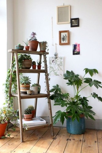 Friendly House Plants For Indoor Decoration 02