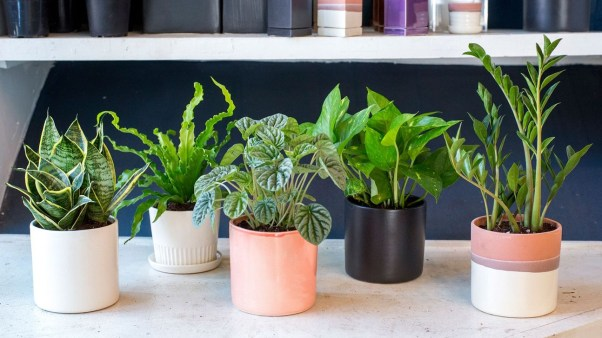 Friendly House Plants For Indoor Decoration 05