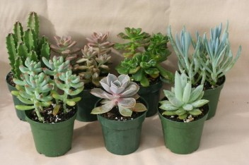 Friendly House Plants For Indoor Decoration 08