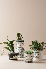 Friendly House Plants For Indoor Decoration 10