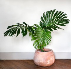 Friendly House Plants For Indoor Decoration 15