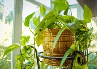 Friendly House Plants For Indoor Decoration 18