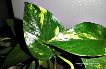 Friendly House Plants For Indoor Decoration 20