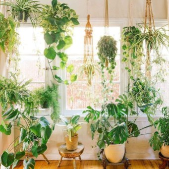 Friendly House Plants For Indoor Decoration 21