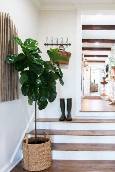 Friendly House Plants For Indoor Decoration 22