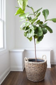 Friendly House Plants For Indoor Decoration 29