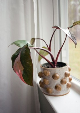 Friendly House Plants For Indoor Decoration 32