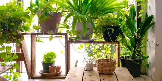 Friendly House Plants For Indoor Decoration 42