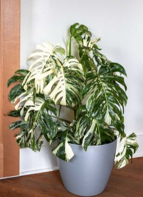 Friendly House Plants For Indoor Decoration 44