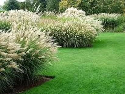 Amazing Evergreen Grasses Landscaping Ideas03