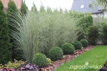 Amazing Evergreen Grasses Landscaping Ideas06