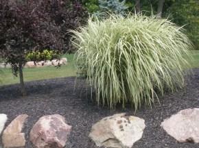Amazing Evergreen Grasses Landscaping Ideas12