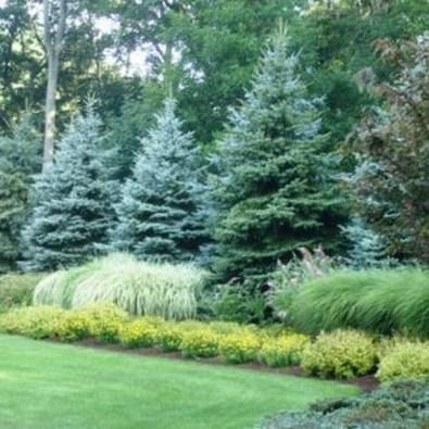 Amazing Evergreen Grasses Landscaping Ideas23