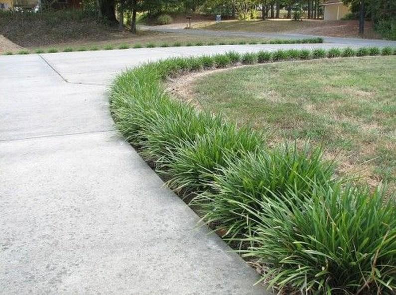 Amazing Evergreen Grasses Landscaping Ideas31