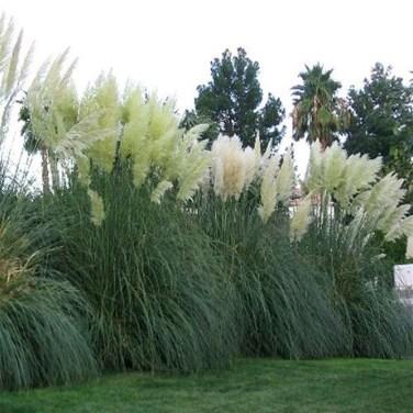 Amazing Evergreen Grasses Landscaping Ideas34