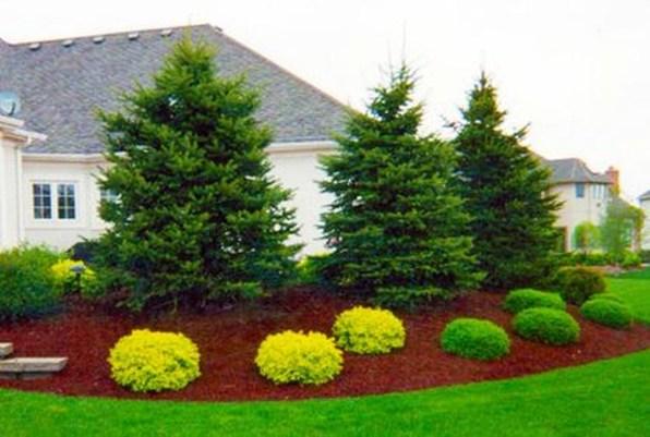 Amazing Evergreen Grasses Landscaping Ideas35