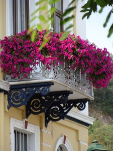 Amazing Windows Flower Boxes Design Ideas Must See04