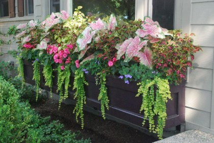 Amazing Windows Flower Boxes Design Ideas Must See36