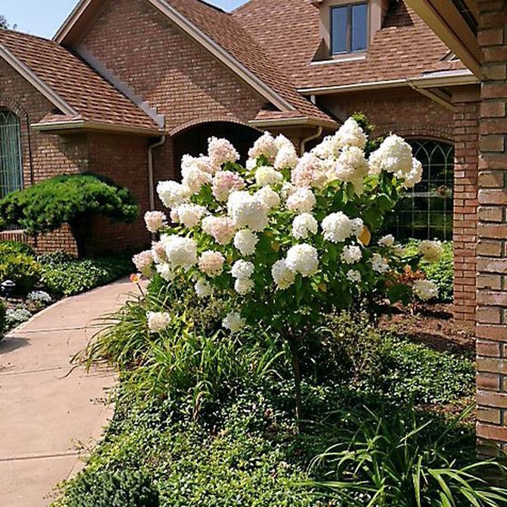 Elegant Colorful Bobo Hydrangea Garden Landscaping Ideas03